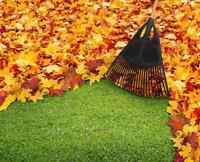 Fall yard & garden clean up
