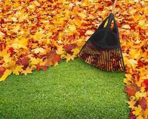 Leaf clean up and eavestrough cleaning London Ontario image 1