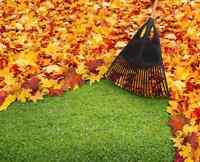 Leaf clean up services!
