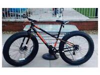 Pirahna fatfish fat bike