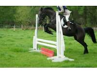 Stunning Irish Sports Horse for Loan