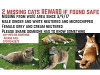 2 missing cats reward if found safe