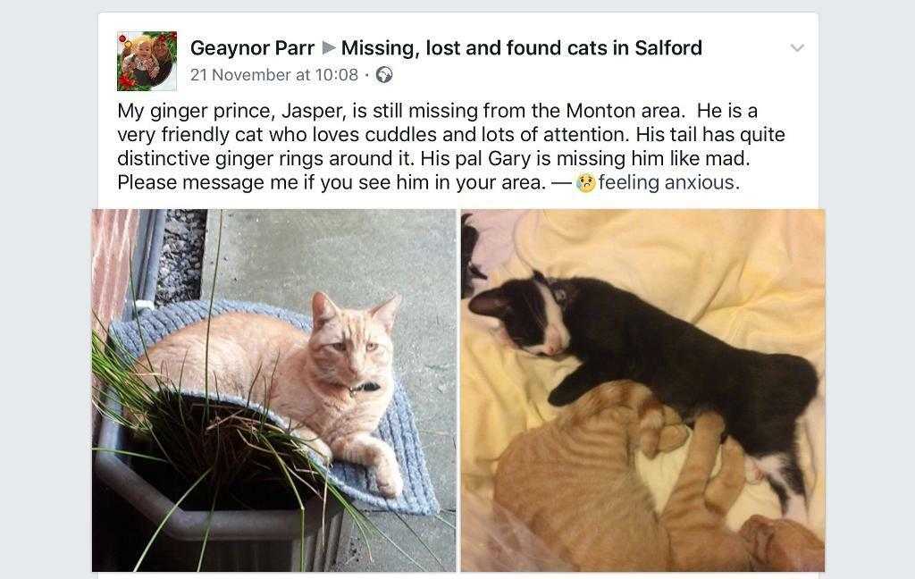 Lost Ginger Boy. Chipped and neutered from Monton,