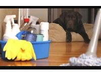 Pet sitter and home cleaner