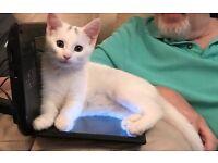 Rehoming female kitten