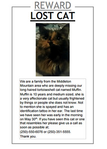 Missing Cat(LH Fem Tortoiseshell/Black,Brown,Orange,White)