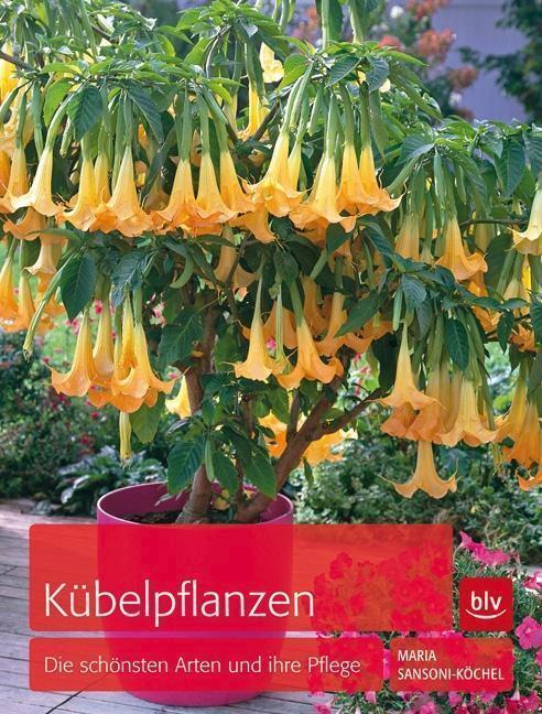 Kübelpflanzen - Maria Sansoni-Köchel - 9783835411357