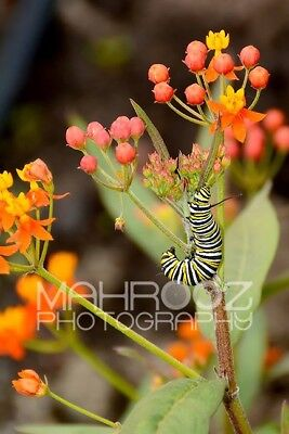 Digital Image Picture Jpeg Desktop Wallpaper Caterpillar Nature Flower Colorfull