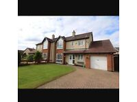 4 bedroom house to rent in a lovely area of Llangefni.