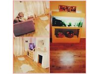Cream 4ft fish tank aquarium with fish and everything neeed