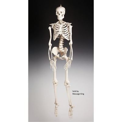 Budget Halloween Decorations (Budget Bucky Skeleton - Fourth Quality - Life size, Free shipping. NO)