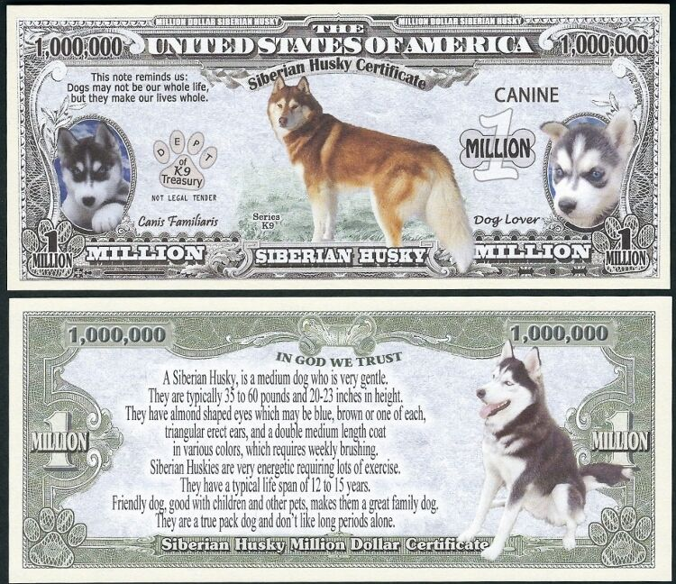Lot of 500 BILLS - Siberian Husky Dog Bill Puppy & Adult Pics, Facts on Back