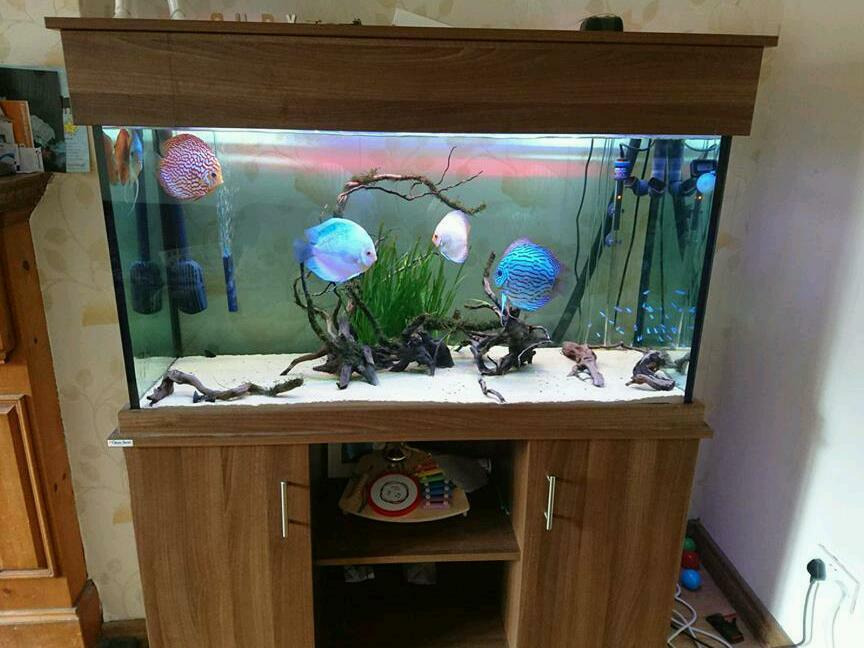 Clearseal 400 fish tank with eheim 300w heater and fluval for Fish tank with filter and heater