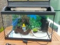 Large fish tank with filter pump