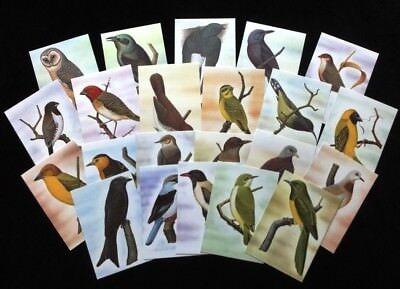 ST THOMAS & Prince Is 1983 BIRDS Wildlife Cards Maxi Unused (22 Items) [D328]