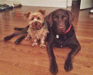 Affordable Caring Dog Sitter/Walker