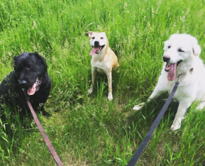 Walks with Jess- Dog walking and pet services