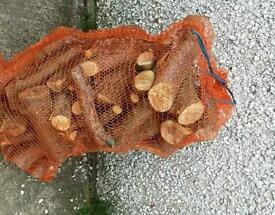 Logs for sale approx 30kg netted bags