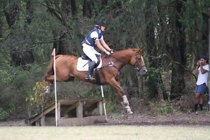 Horse training/ exercising/ caring / agisting Devon Meadows Casey Area Preview