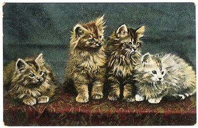 Four Cute LITTLE KITTENS on a Table Postcard c 1910 TABBY CATS