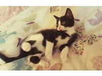 Beautiful female kitten 😻