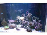 Marine coral, fish, rock, tropical, tank, aquarium