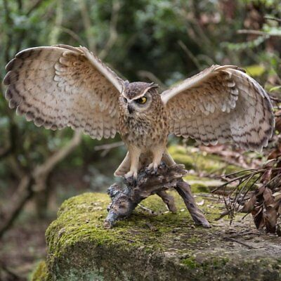 NEW Eagle Owl on Branch Figurine - Life Like Figurine Statue Home / Garden  for sale  Shipping to Canada