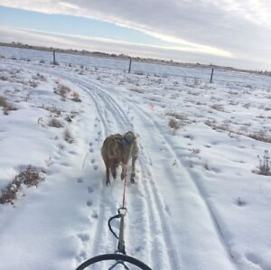 Looking for dogsled kennels in Saskatchwan