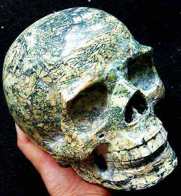 "7.0"" Yellow TURQUOISE Skeleton,Crystal Healing SKULL"