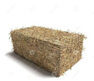 Hay bales for sale - pick up north Avoca - $10 each North Avoca Gosford Area Preview