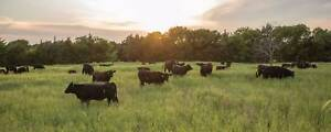 Wanted: WANTED - Farm Land To Let / Rent for Grazing