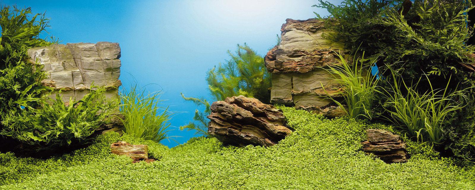Aquarium Background Decorations For Sale Ebay