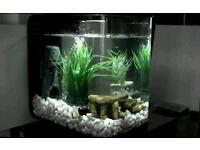 Biorb nano reef 15l tank, shrimp tank