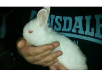 Gorgeous, healthy baby rabbits for sale
