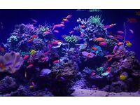 Bespoke Aquarium Design and consultation