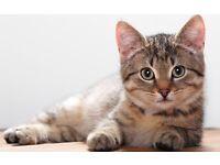 The Cat Lady - Professional Cat Visits/Cat Sitting