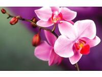 Orchids Thai Massage & Spa in Leamington Spa