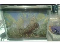 Child's fish tank full set up.hold 12ltrs water