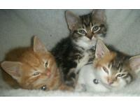 Beautiful kittens ready now