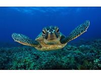 HD SEA TURTLE FULL SIZED PICTURE POSTER MOUNTED IN FULL SIZED POSTER FRAME,NEW