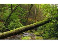 Wanted: Fallen Trees - Will remove for you free of charge