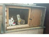2 rabbit and hand made hutch