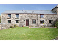Dog Friendly Holiday Homes in Cornwall