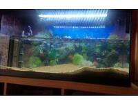96 litre fish tank