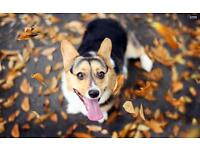 Your dog will be happier and healthier