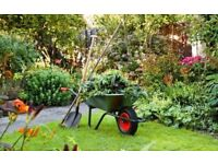 Gardener available for re-design and maintenance / general tidy-ups. Horticulture Trained