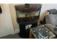 80 Gallon Fish Tank