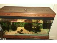 Fish tank for sale! Solid wood cabinet