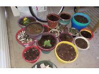 Plant pots and paint