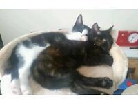Two 12 week old kittens
